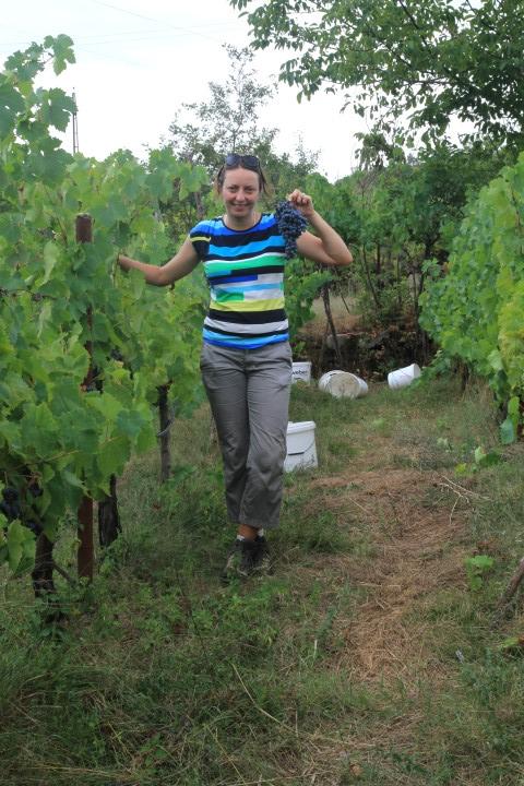 Harvesting in Montenegro