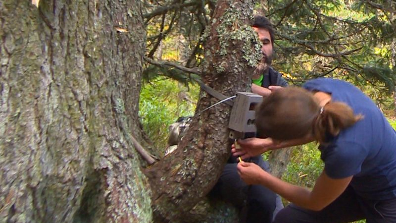 Interview about the Balkan Lynx Expedition