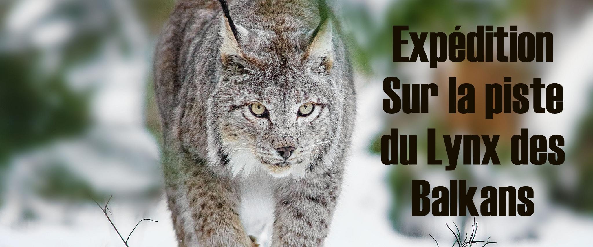 expedition lynx des balkans